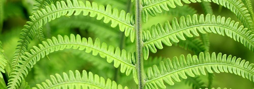 piante-contro-linquinamento
