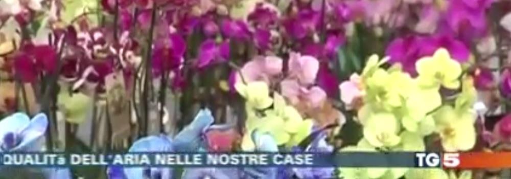 LE PIANTE DEPURANO L'ARIA: NE PARLIAMO AL TG 5!
