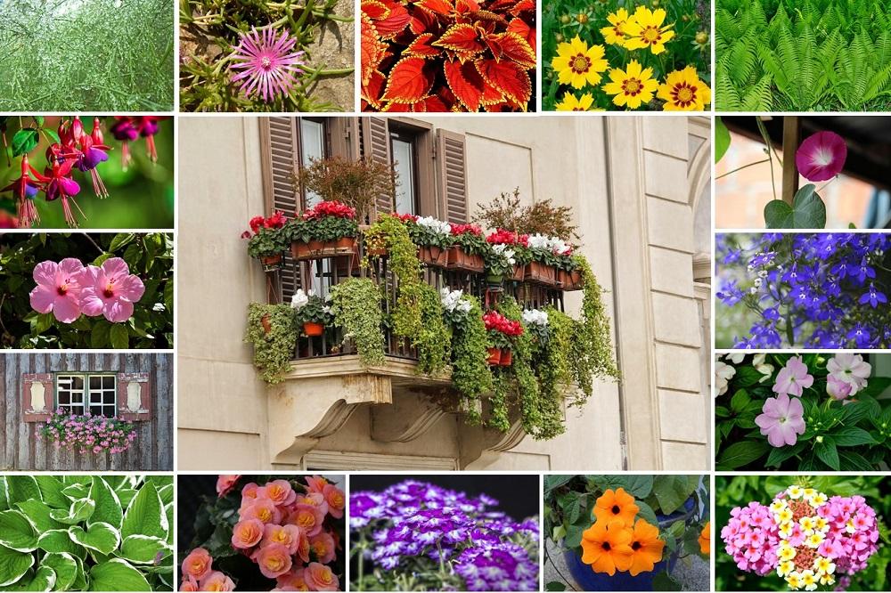 balcone fiorito in estate