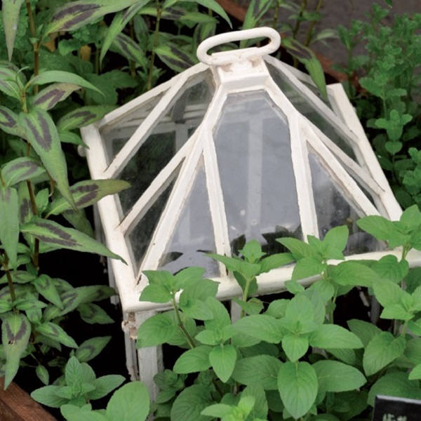 proteggere le piante dal gelo - Campana per giardino in vetro