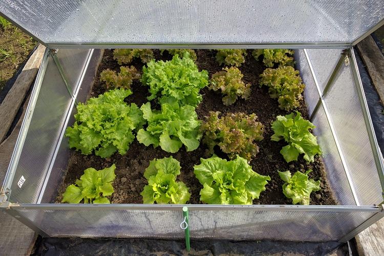 proteggere le piante dal gelo - Campana per orto in plastica