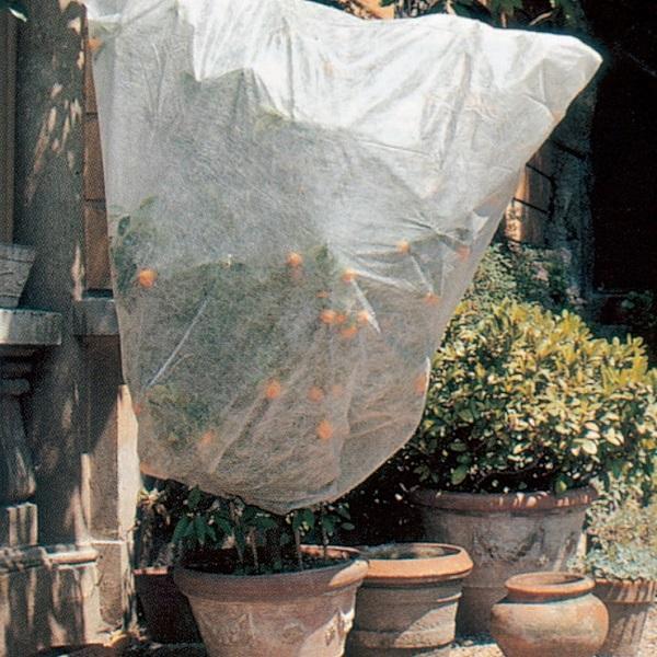proteggere le piante dal gelo - Cappuccio in tnt